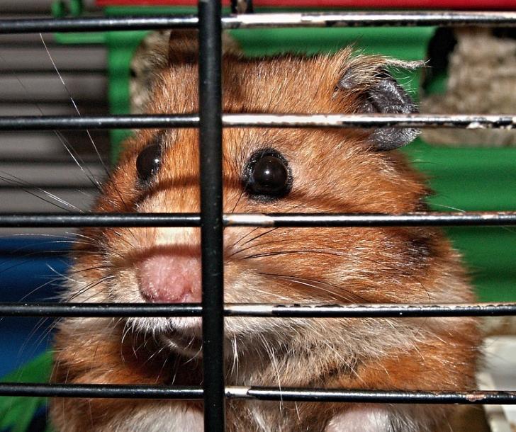 Conseils pour jouer et se sentir bien avec les hamsters